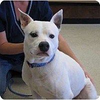 Adopt A Pet :: BO - Kingwood, TX