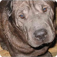 Adopt A Pet :: Millie - Newport, VT