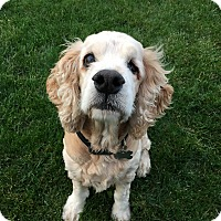 Adopt A Pet :: Jasper 13yr Adopted - Mentor, OH