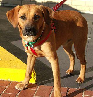 Shepherd (Unknown Type)/Hound (Unknown Type) Mix Dog for adoption in Somerset, Kentucky - Makita