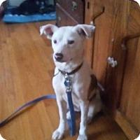 Adopt A Pet :: Gracie - Rexford, NY