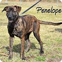 Adopt A Pet :: Penelope - DuQuoin, IL