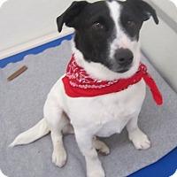 Adopt A Pet :: Mikey - Holton, KS