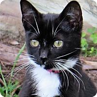 Adopt A Pet :: Maci - Gonzales, TX