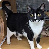 Adopt A Pet :: London - Nottingham, MD