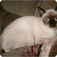Adopt A Pet :: Spencer - Franklin, NC