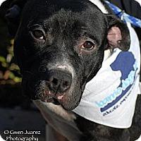 Adopt A Pet :: Tita - Houston, TX