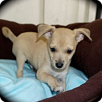 Adopt A Pet :: Jeter - La Habra Heights, CA