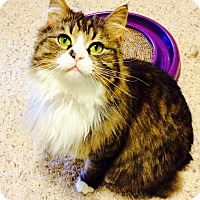 Adopt A Pet :: Penelope - Chesterfield Township, MI