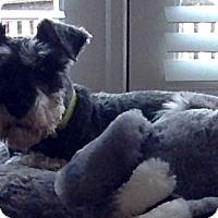 Adopt A Pet :: Rexx - Laurel, MD
