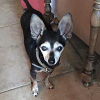 Adopt A Pet :: Fra'be - Blanchard, OK