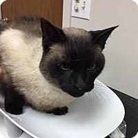 Adopt A Pet :: Clara - Barrington Hills, IL