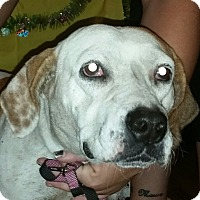 Adopt A Pet :: Marta - Chiefland, FL