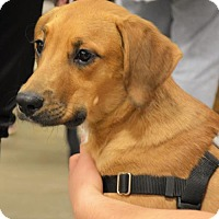 Adopt A Pet :: Hampton - Rockville, MD
