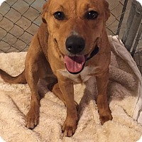 Adopt A Pet :: LADYBUG - Traverse City, MI