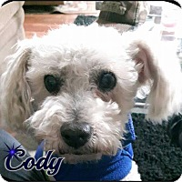 Adopt A Pet :: CODY - Barriere, BC