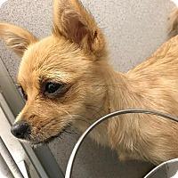 Adopt A Pet :: Juliet - Jupiter, FL