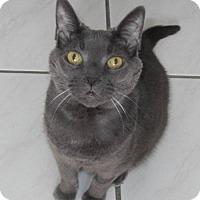 Adopt A Pet :: Autumn - Declawed - Richmond Hill, ON