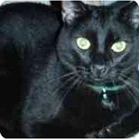 Adopt A Pet :: Cyrano - Pasadena, CA