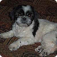 Adopt A Pet :: Sammie - Denver, CO