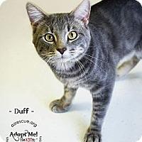 Adopt A Pet :: Duff - Phoenix, AZ