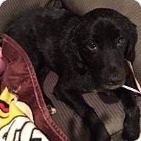 Adopt A Pet :: Sparticus - East Rockaway, NY