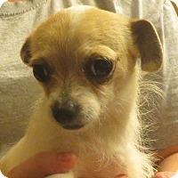 Adopt A Pet :: Josephine - Greenville, RI