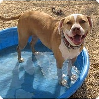 Adopt A Pet :: P'Dunkle - Toluca Lake, CA