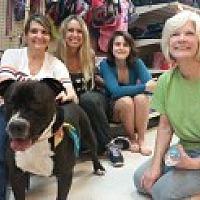 Mastiff/Bulldog Mix Dog for adoption in Livonia, Michigan - Hugo