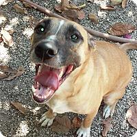 Adopt A Pet :: Blondie - Miami, FL