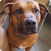 Adopt A Pet :: Rusty - selden, NY