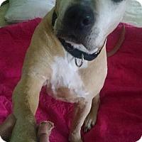 Adopt A Pet :: Mimi - Cherry Valley, NY