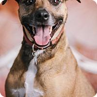 Adopt A Pet :: Kalea - Portland, OR