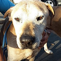 Adopt A Pet :: KOA - COURTESY - Los Angeles, CA