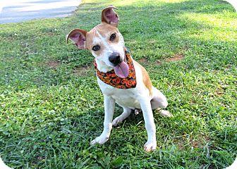 Labrador Retriever Mix Puppy for adoption in Lexington, North Carolina - TUFF