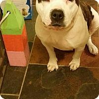 Adopt A Pet :: Smiley - Orlando, FL