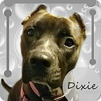 Adopt A Pet :: Dixie - Des Moines, IA