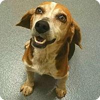 Adopt A Pet :: Mllie - Elmwood Park, NJ