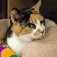 Adopt A Pet :: Brooklyn II - Chicago, IL