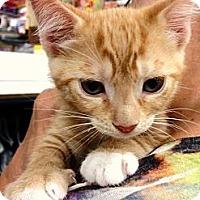 Adopt A Pet :: Fonzi - Ft. Lauderdale, FL