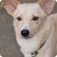 Adopt A Pet :: Winnie - La Habra Heights, CA