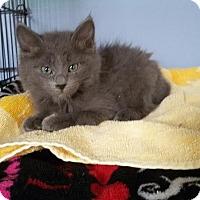 Adopt A Pet :: Dusty - McDonough, GA