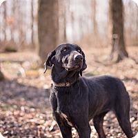 Adopt A Pet :: Sadie - Lewisville, IN