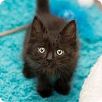 Adopt A Pet :: Frisco - Fountain Hills, AZ