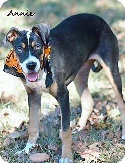 Weimaraner Mix Dog for adoption in Manchester, Connecticut - Annie in CT