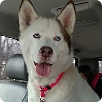 Adopt A Pet :: Angel - Allison Park, PA