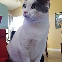 Adopt A Pet :: Taco - Orange, CA