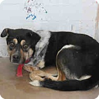 Adopt A Pet :: Nelson - Only $75 adoption! - Litchfield Park, AZ