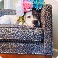 Adopt A Pet :: LADY - Kittery, ME