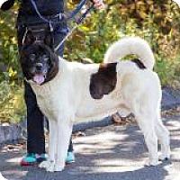 Adopt A Pet :: Titan - Toms River, NJ